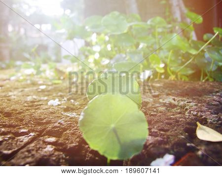 Start up business concept : Young plant growing in brown stone