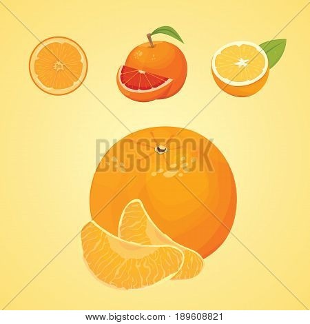 Vector collection of fresh ripe oranges and tangerines with leaves. vector orange