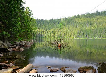 Glacial Devil`s Lake in the National park Sumava,Czech republic