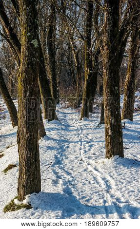empty footpath in naked winter forest at sunrise