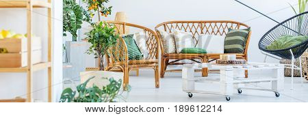 Plants and rattan furniture in cozy white living room