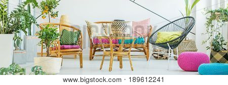 Designer interior of living room with rattan furniture and plants