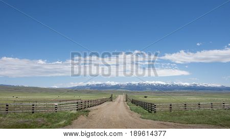 Fenced pasture with cows and rugged snow capped mountains in the background. Green rolling foothills are at the foot of the mountains.