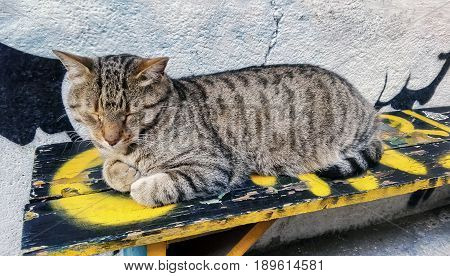 Adorable sleeping male tabby cat on a bench. Striped cat.