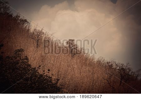 Landscape photo of the sky above the tops of a clump of trees in the forest with mountain nature background in vintage tone with vignetting.