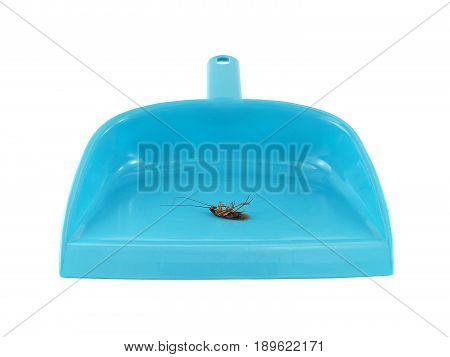 close-up blue dust pan with dead cockroach isolated on white background, cleaning house with tool used in conjunction with brush or broom for pick up dirt