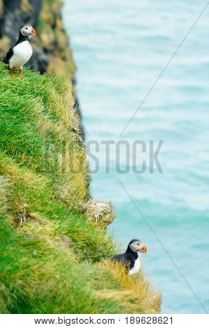 Puffin Holding Fish In His Mouth