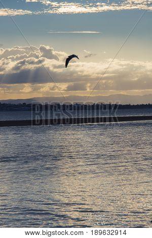 Pristine Beach At Wellington Point, Brisbane