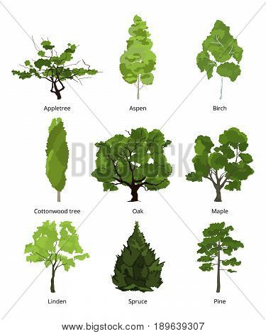 Vector set of green garden trees. Nature illustrations isolate on white. Collection trees organic appletree and aspen, birch and cottonwood