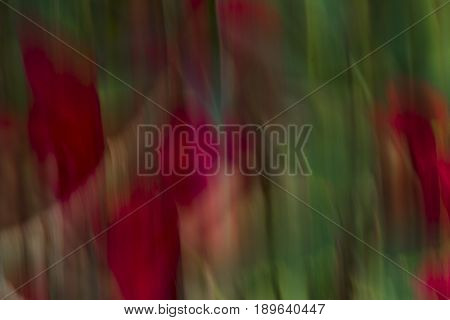 Abstraction using a red flower and movement