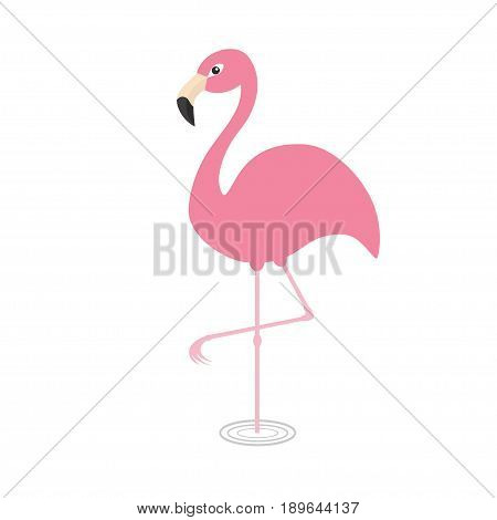 Pink flamingo standing on one leg. Circles on the water. Exotic tropical bird. Zoo animal collection. Cute cartoon character. Decoration element. Flat design. White background. Isolated. Vector