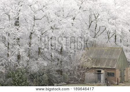 Barn In Winterlandscape
