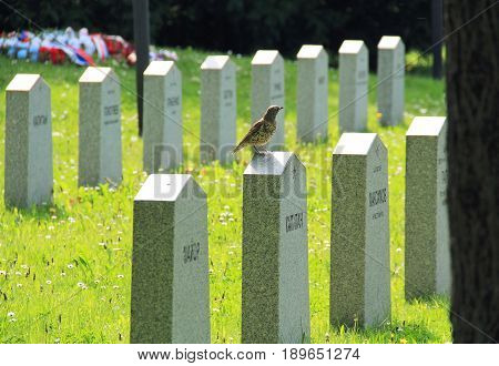 song thrush (Turdus philomelos) sitting on the tombstone on the cemetery of russian soldiers killed during the world war II in Frydek-Mistek, Czech Republic, May 16, 2017