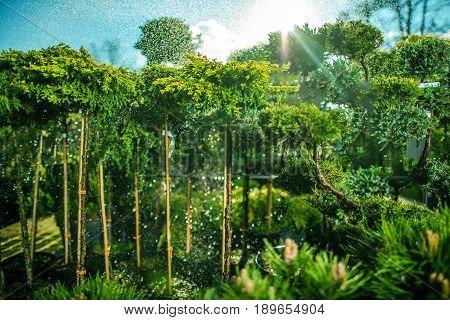 Farm Plants Watering. Plants For Sale Cultivation Theme. Garden Plants.