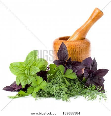 Fresh spices and herbs and wooden mortar isolated on white background cutout. Sweet basil, red basil leaves, dill and parsley.