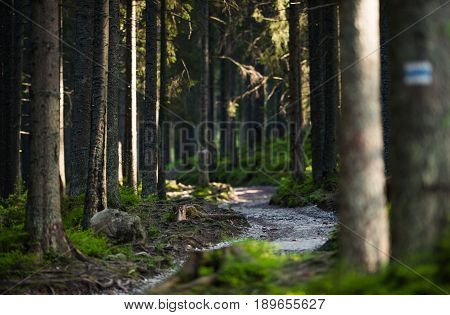 Forest Trail Path with Shallow Depth of Field. Recreational Theme.