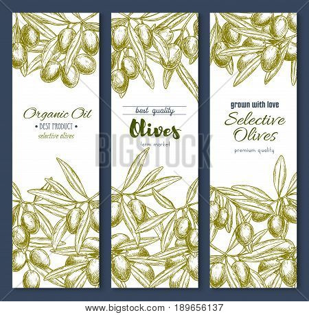 Olives banners for olive oil product design. Vector set of fresh organic farm grown harvest of green and black olives on branches. Sketch templates for Italian cuisine and market or store