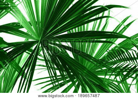Abstract green palm leaves on white closeup.