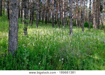 Green Thicket In The Woods By Day.