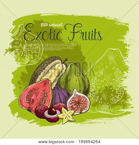 Exotic fruits vector poster of tropical durian, guava or figs and lichee or carambola star fruit and fresh mangosteen or maracuya passion fruit for natural organic farm market or store design