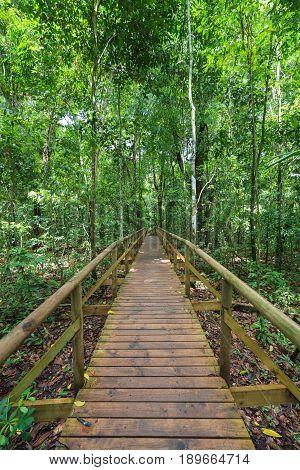 Boardwalk in forest Manuel Antonio Costa Rica