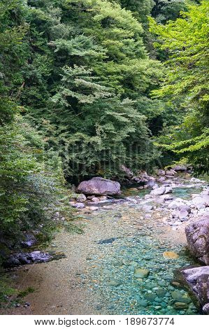 Beautiful Forest Landscape With Green Trees And Crystal Clear River