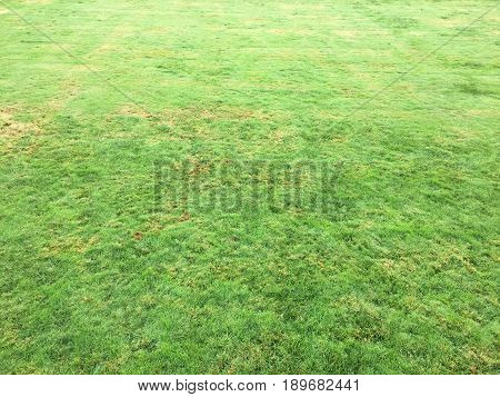 Grass.Green. Grass Background. Natural green grass texture, Natural green grass background for design with copy space for text or image.
