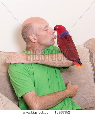 Man Kissing A Tame Red Parrot