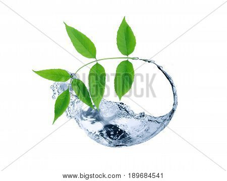 Twig with freshness green leaves in splashing water