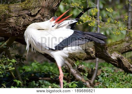 One storks in a wood in front of a tree trunk