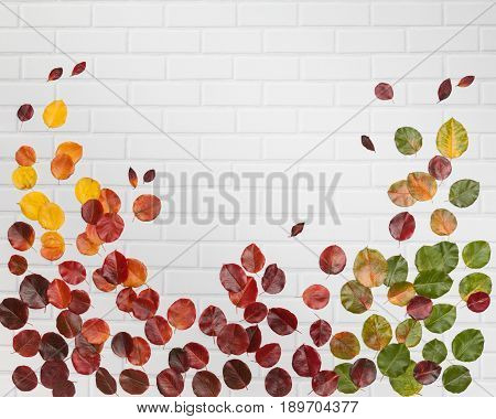 Bright green, yellow, orange and red autumn leaves lying flat on the white brick background wih central empty place for your text
