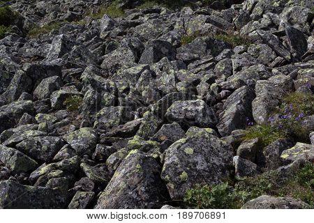 The Stone River. Kurumnik - A Gray Stone Placer Northern Urals. Russia.