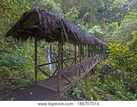 Indian bridge with a canopy of reeds. The Amazon jungle. Ecuador.