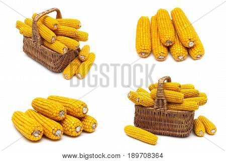 Mature corn cobs on a white background. Horizontal photo.