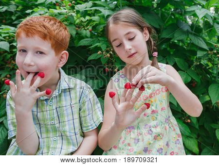 Happy children eating berries from fingers in summer garden. Redhead funny boy and girl, sister and brother having fun outdoors in raspberry cane. Healthy food for kids
