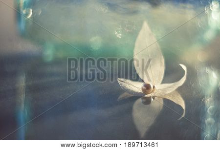 Transparent sheets on a glass table with a pearl. The skeleton leaves. Artistic macro.