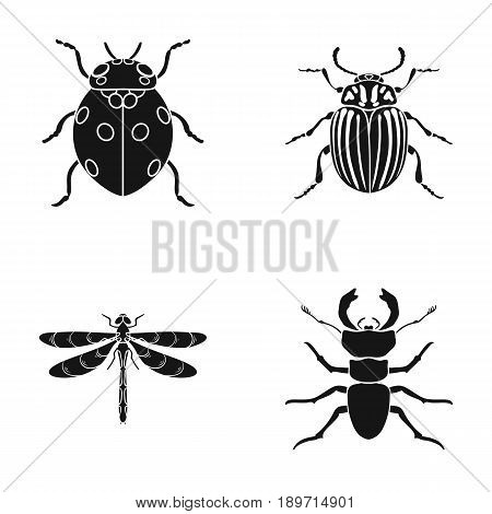Insect, bug, beetle, paw .Insects set collection icons in black style vector symbol stock illustration .