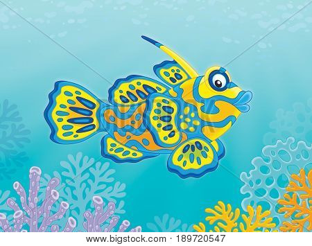 Illustration of a tropical mandarin fish swimming over corals