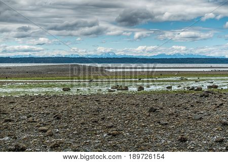 A landscape view of the Washington shoreline at low tide with the Olympic Mountains in the distance.