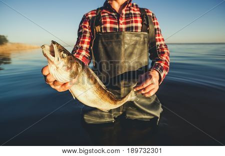 One Man - A Fisherman Standing In The Water Holding In His Hand Caught On Spinning Pike.