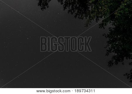 Millions of stars above the treetops. Starry night background with a view from the bottom up.