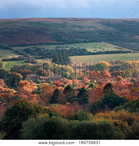 Autumn landscape. Slope of a large hill in the Dartmoor National Park. Devon. England