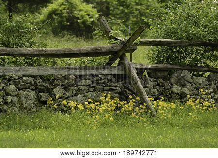 A fenceline in Gettysburg, Pennsylvania.  A traditional wooden picket fence erected over a wall of fieldstone, with yellow wild flowers in the foreground.
