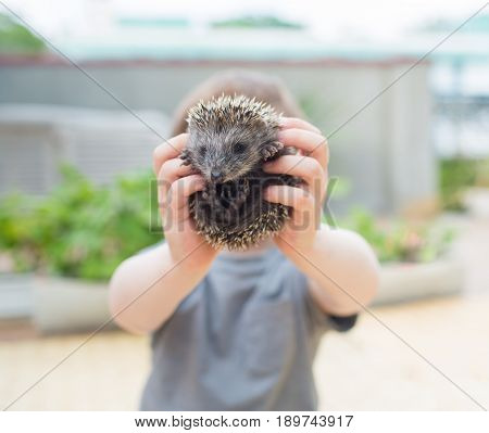 Little boy playing with nice small hedgehog
