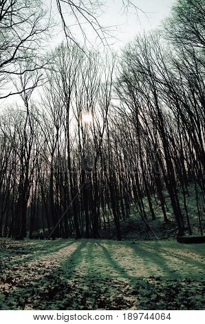 sun shining through thick branches in a gloomy forest in the morning