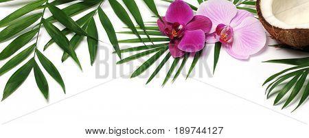 beautiful tropical frame