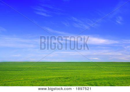 绿色的田野,蓝色的天空