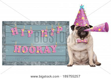 cute pug puppy dog with pink party hat and horn and old blue wooden sign with festive hip hip hooray banner isolated on white background