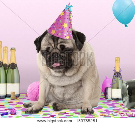 cute pug puppy dog wearing party hat lying down on confetti drunk on champagne with hangover on pink background
