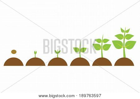 plants growing in the pot from small to big set of illustrations with phases plant growth plant growing in soil